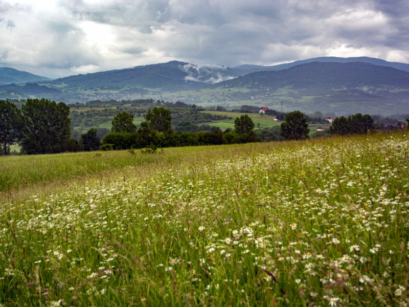 Kwietna łąka na Matysce późnym latem, fot. Radosław Szczepanek