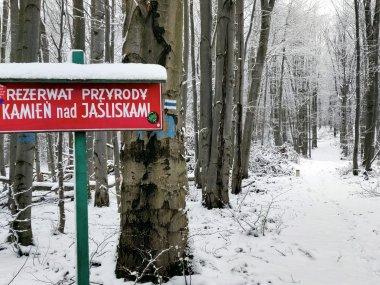 Rezerwat Kamień nad Jaśliskami, fot. Robert Bajorek
