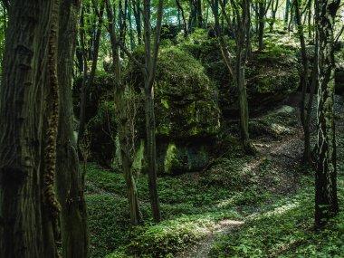 Las obok rezerwatu, fot. Natalia Szymonowska