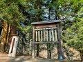 Dendrofon w Lesie Tuchowskim, fot. Agnieszka Cygan