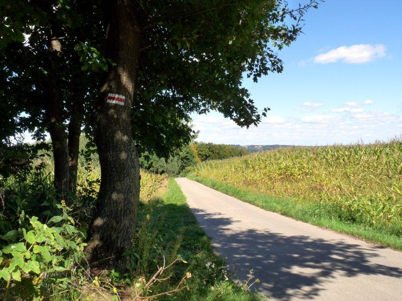 Na czerwonym okrężnym szlaku wokół Tarnowa