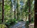 Szlak zielony z przełęczy Glisne na Szczebel, fot. Agnieszka Cygan